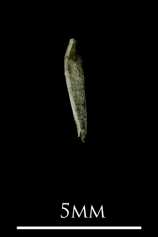 Three-spined stickleback for assessment lateral view