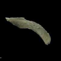 Grayling maxilla lateral view