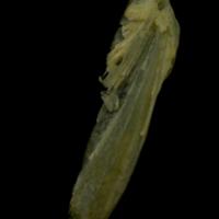http://files.uat.fishbone.nottingham.ac.uk/ACH-33.jpg