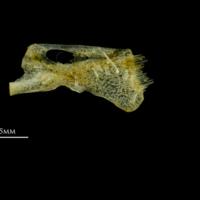 http://files.uat.fishbone.nottingham.ac.uk/HOR-16.jpg