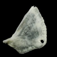 http://files.uat.fishbone.nottingham.ac.uk/ROA-3.jpg