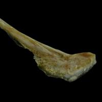 http://files.uat.fishbone.nottingham.ac.uk/CSB-4.jpg