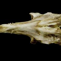 http://files.uat.fishbone.nottingham.ac.uk/CEE-1.jpg