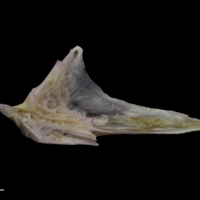 http://files.uat.fishbone.nottingham.ac.uk/TUB-22.jpg