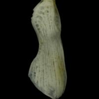 http://files.uat.fishbone.nottingham.ac.uk/RGU-34.jpg