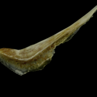 http://files.uat.fishbone.nottingham.ac.uk/CSB-3.jpg