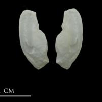 European conger otolith(s) detail view