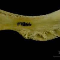 http://files.uat.fishbone.nottingham.ac.uk/COD-33.jpg