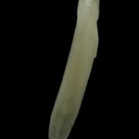 http://files.uat.fishbone.nottingham.ac.uk/BUR2-28.jpg