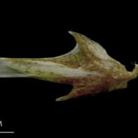 http://files.uat.fishbone.nottingham.ac.uk/SMA-13.jpg