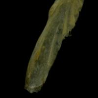 http://files.uat.fishbone.nottingham.ac.uk/ACH-32.jpg