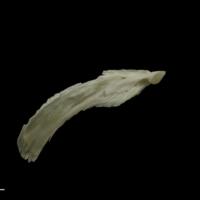 Grayling maxilla medial view