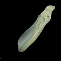 European seabass supracleithrum medial view