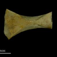 http://files.uat.fishbone.nottingham.ac.uk/ACH-16.jpg