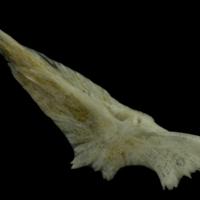 http://files.uat.fishbone.nottingham.ac.uk/RGU-10.jpg