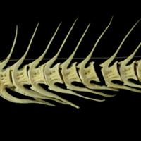 http://files.uat.fishbone.nottingham.ac.uk/COD1-5.jpg