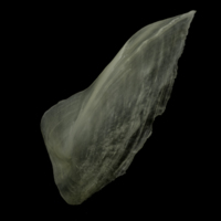 Burbot subopercular lateral view