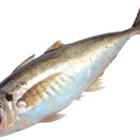 fish_PNG1149.png