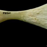 http://files.uat.fishbone.nottingham.ac.uk/PIK-19.jpg