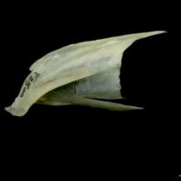 http://files.uat.fishbone.nottingham.ac.uk/PIK-21.jpg