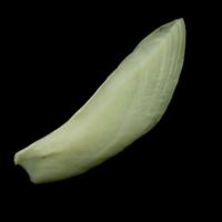 Common carp subopercular lateral view